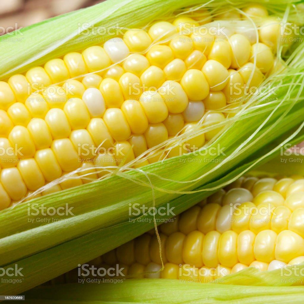 Fresh summer corn royalty-free stock photo
