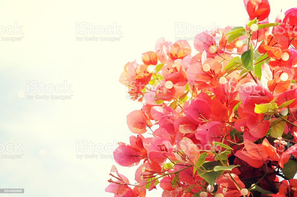 Fresh summer flower bouquet at farm market. stock photo