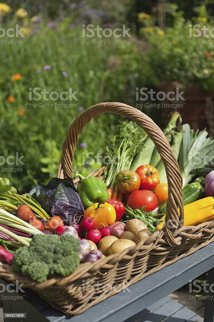 Fresh Summer Seasonal Vegetable Harvest in Wicker Basket stock photo