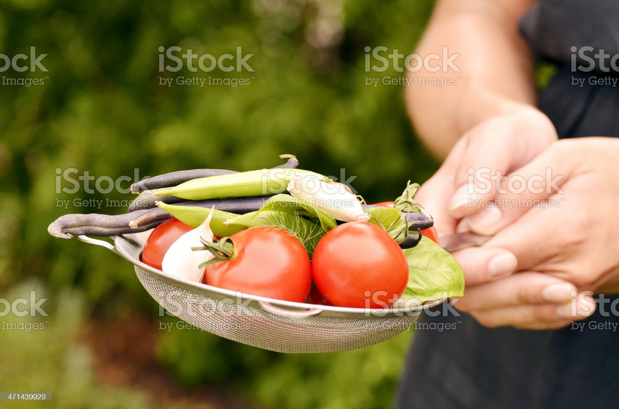 Fresh Summer Vegetables royalty-free stock photo