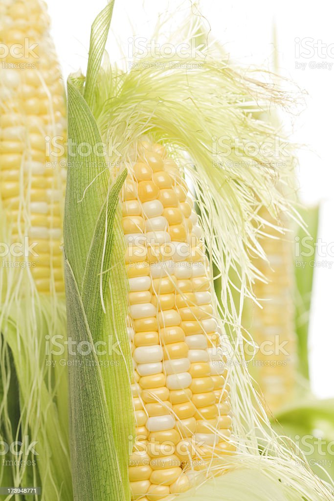 Fresh Sweet Corn in the Summer Vt royalty-free stock photo