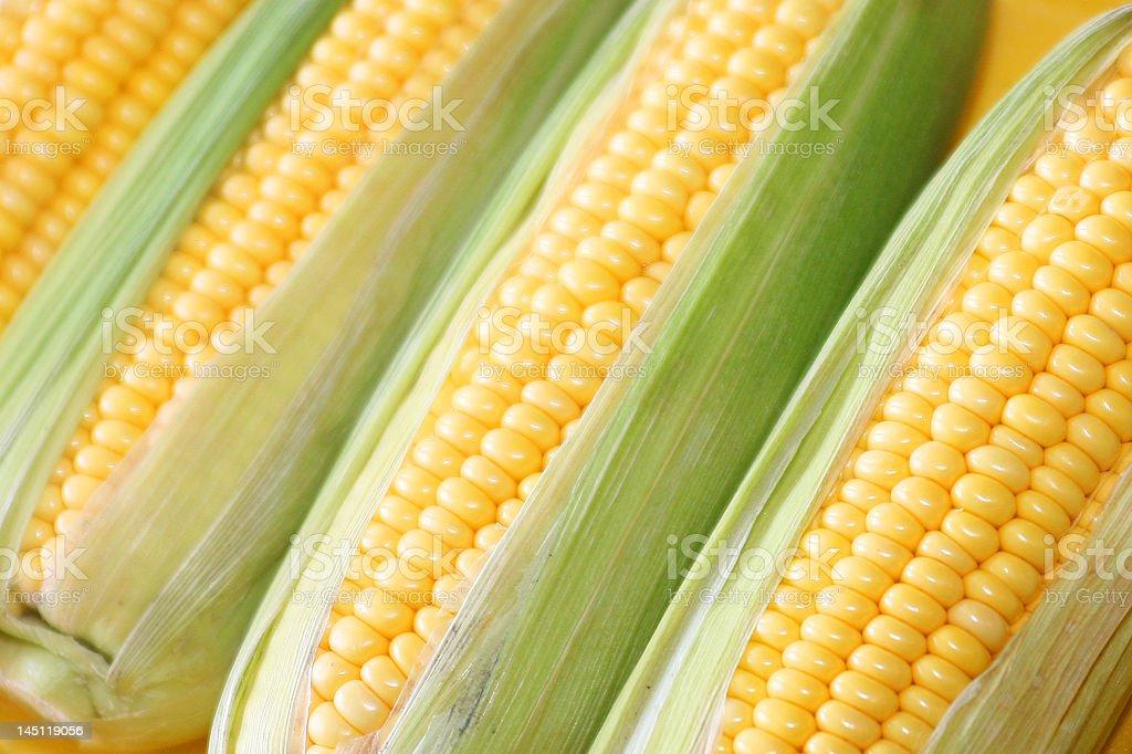 fresh sweet corn stock photo