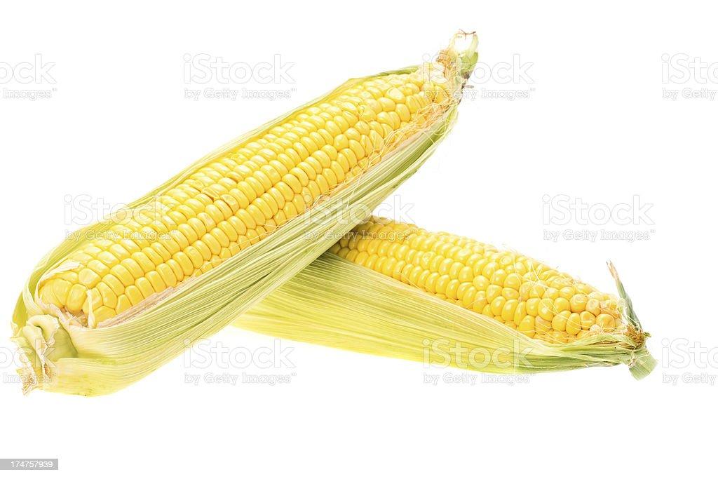 Fresh sweetcorn or corn on the cob stock photo