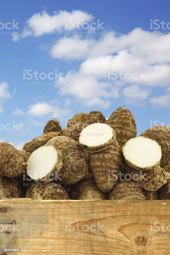 fresh taro roots (colocasia) and some cut slices royalty-free stock photo