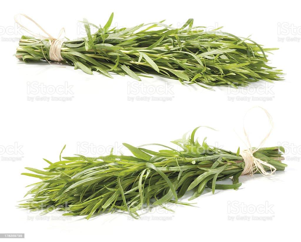 Fresh tarragon herb royalty-free stock photo