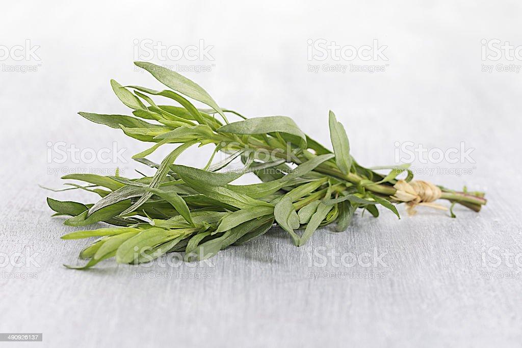 Fresh tarragon herb stock photo