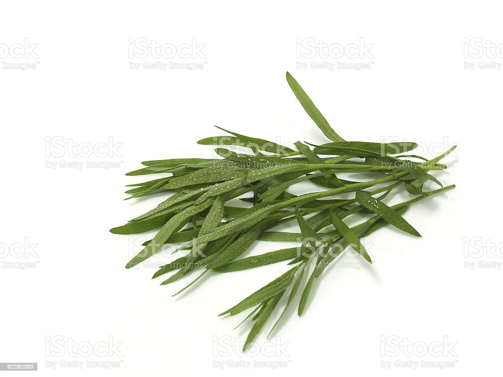 Fresh Tarragon royalty-free stock photo