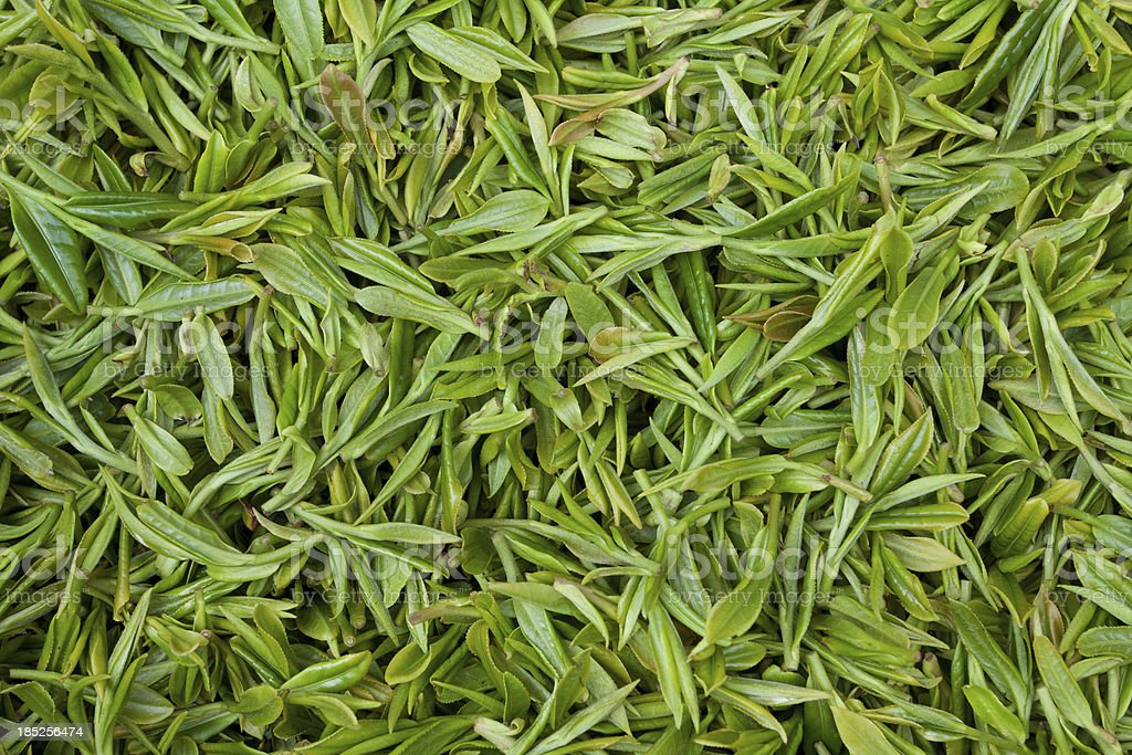 Fresh tea leaves background royalty-free stock photo
