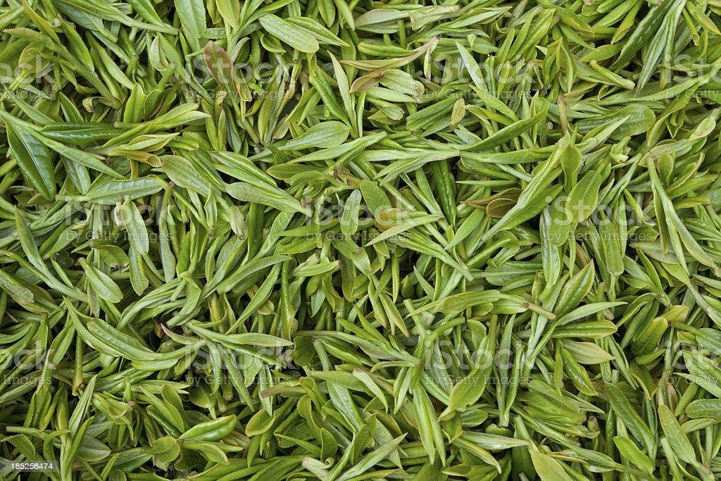 Fresh tea leaves background stock photo
