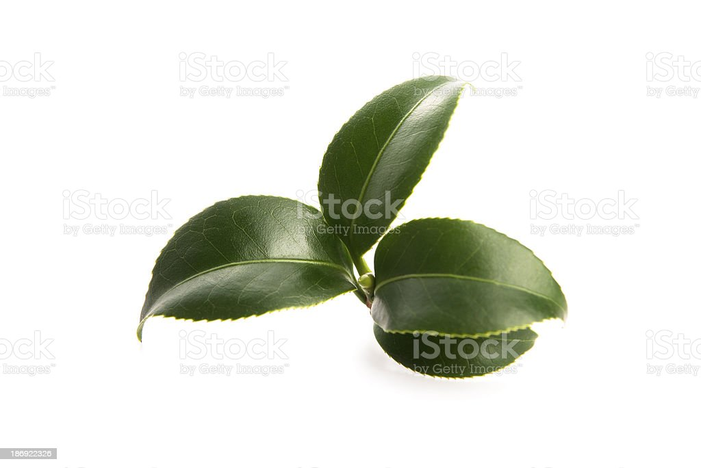fresh tea leaves royalty-free stock photo