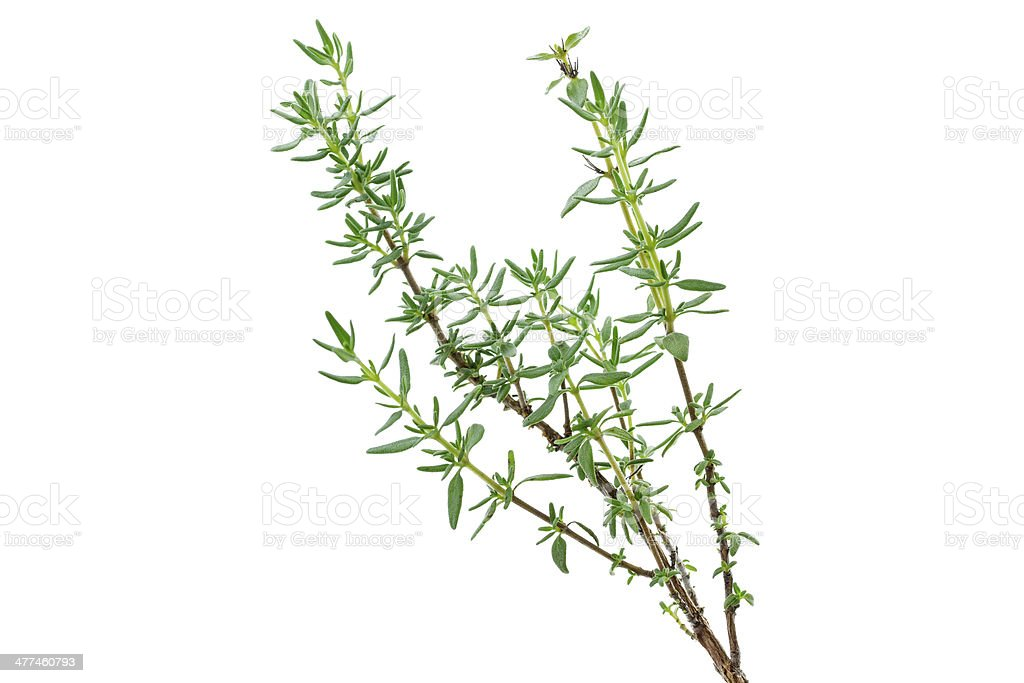 Fresh thyme herb on white background stock photo