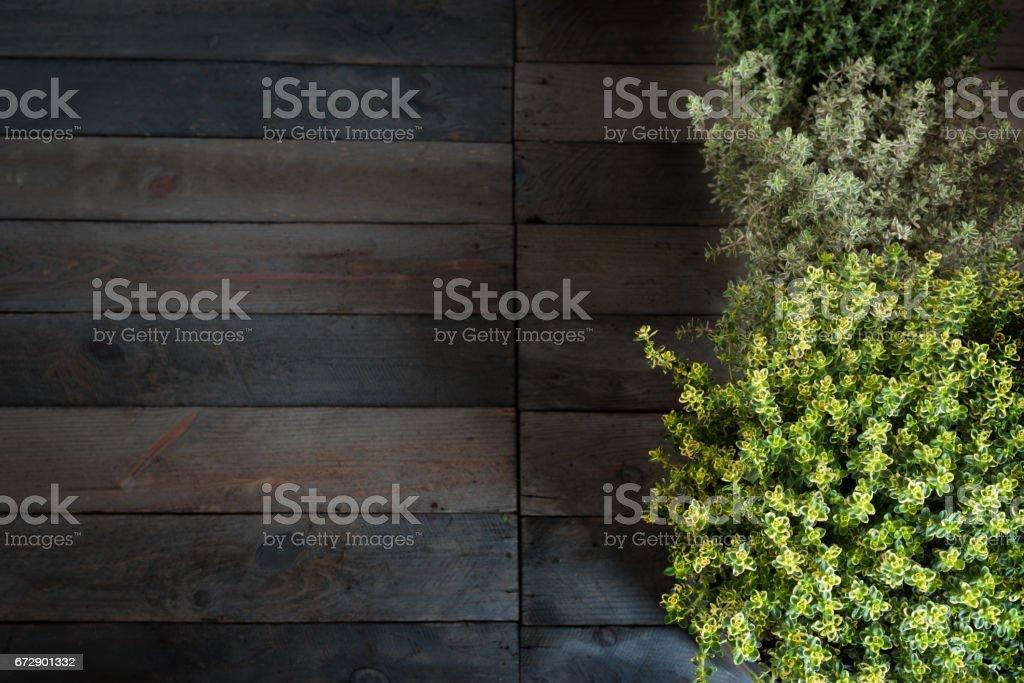 Fresh thyme herbs on rustic wood stock photo