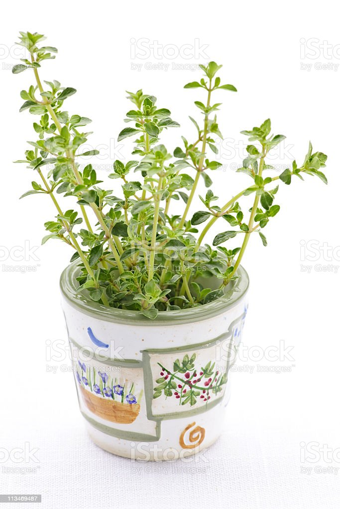 Fresh thyme on white background royalty-free stock photo
