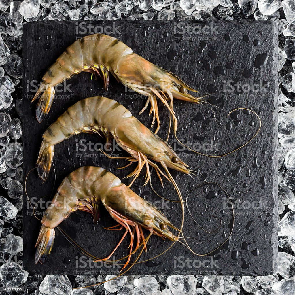 Fresh tiger shrimp on ice on a black stone table stock photo