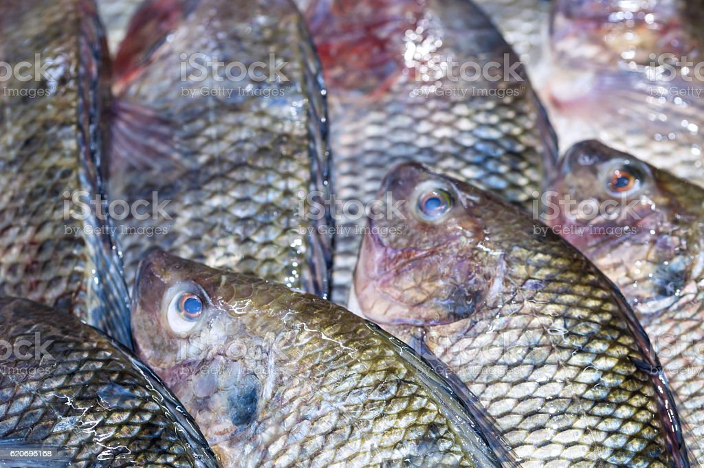 Fresh Tilapia fish aka Pla Nin stock photo