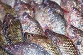 Fresh Tilapia fish aka Pla Nin
