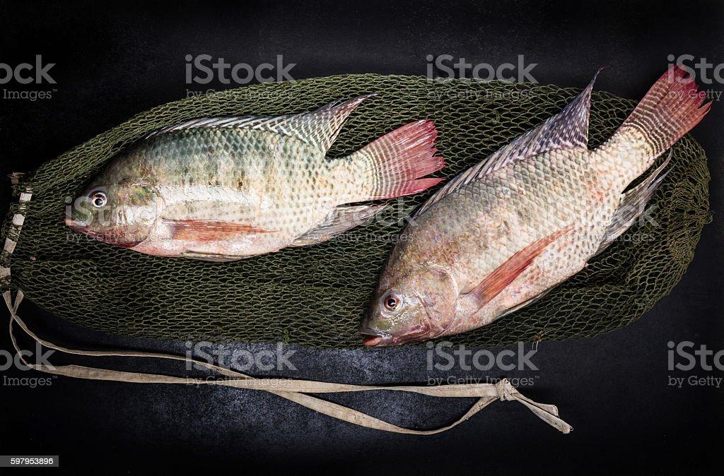 fresh tilapia fishes stock photo