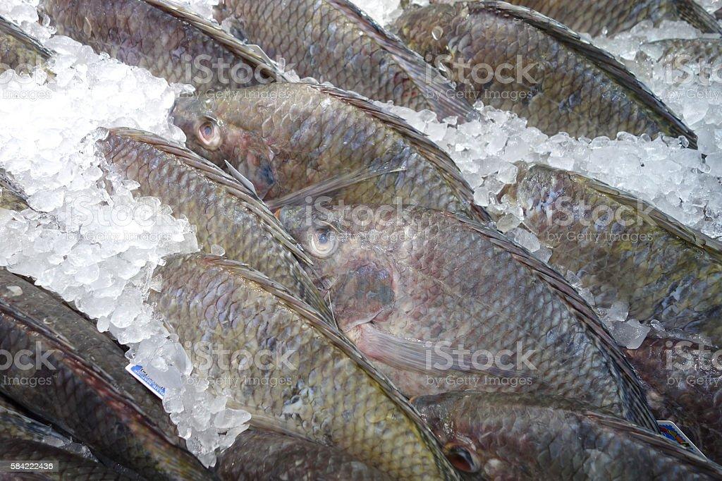 fresh Tilapia on ice in market stock photo