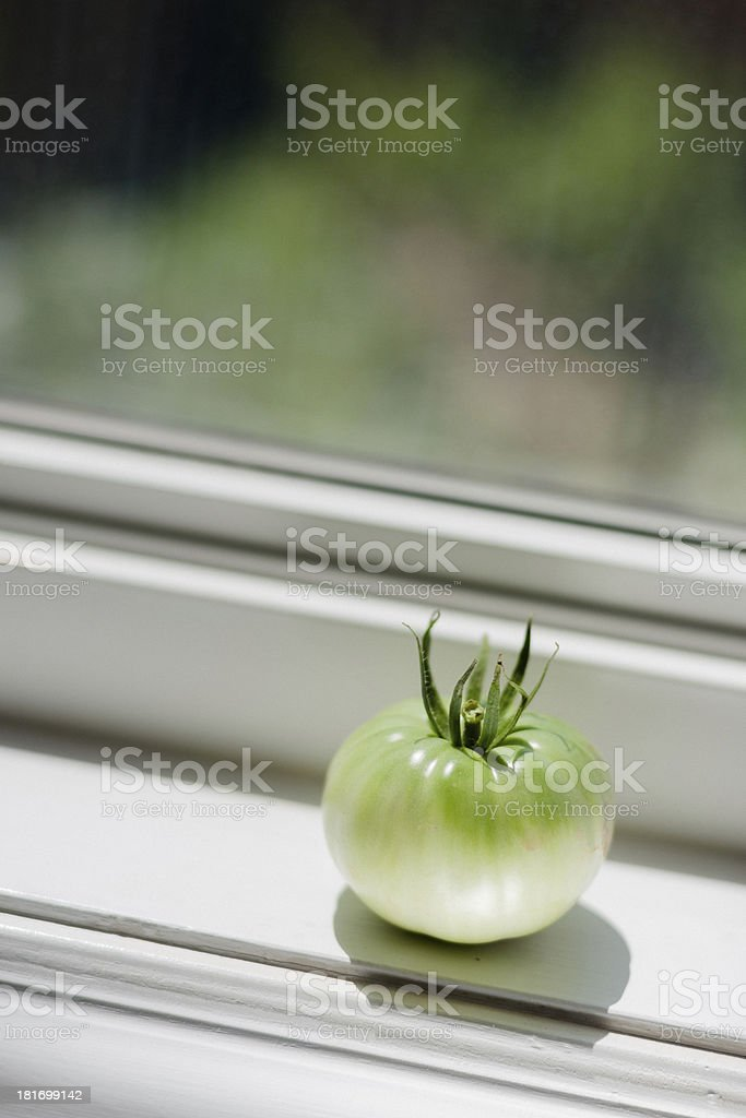 Fresh Tomatoes in the Garden royalty-free stock photo