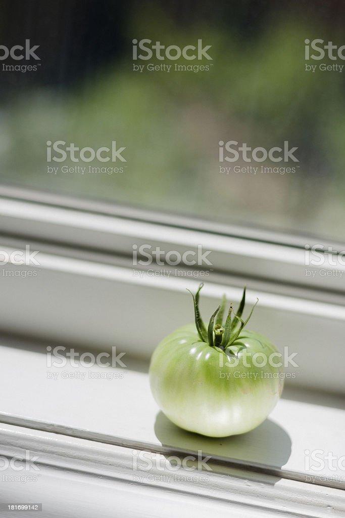 Fresh Tomatoes in the Garden stock photo