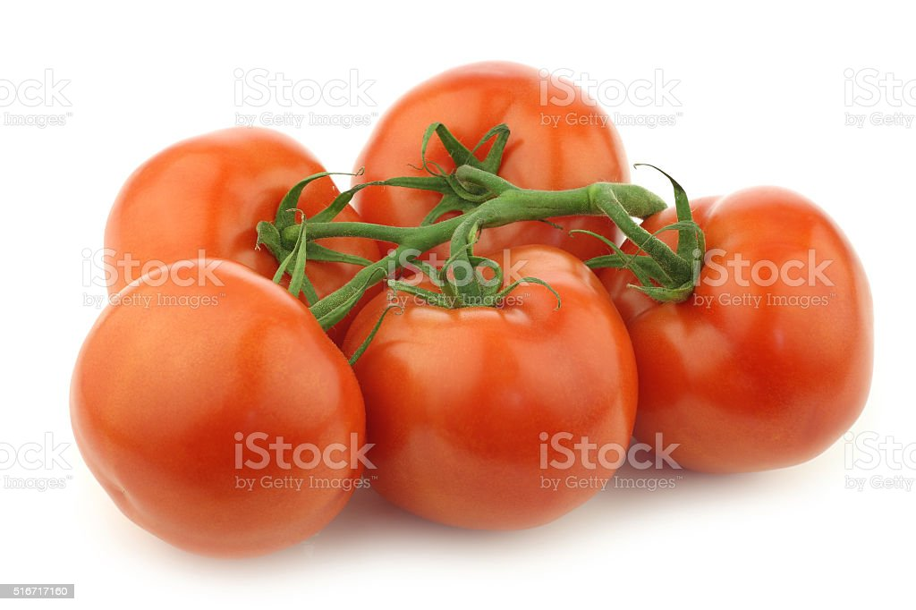 fresh tomatoes on the vine stock photo