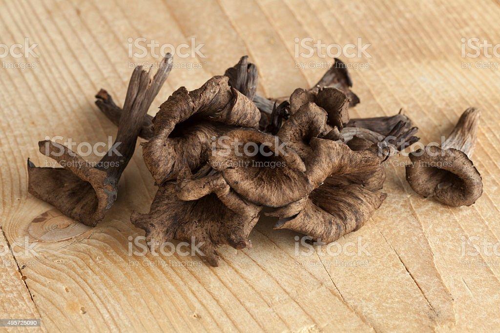 Fresh trompet des morts mushrooms stock photo