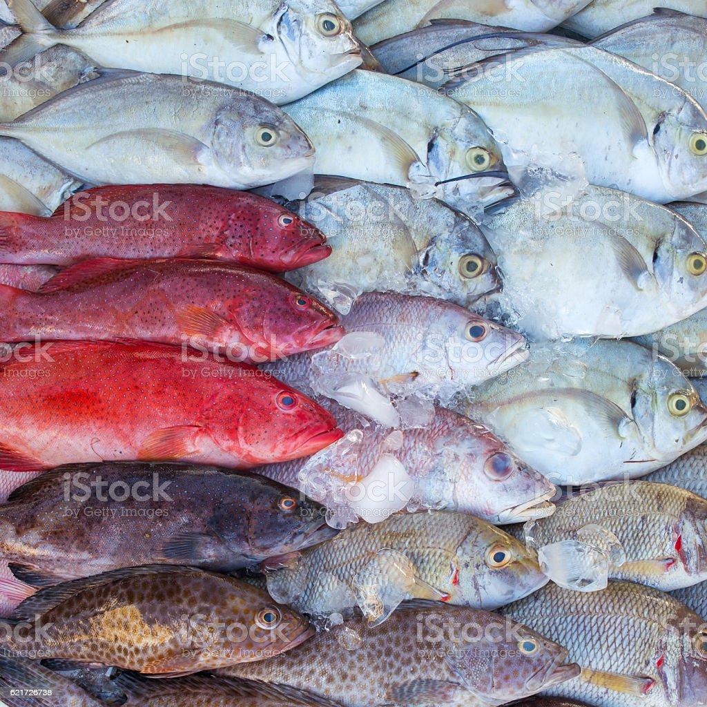 Fresh tropical fish on ice in the Kota Kinabalu market stock photo