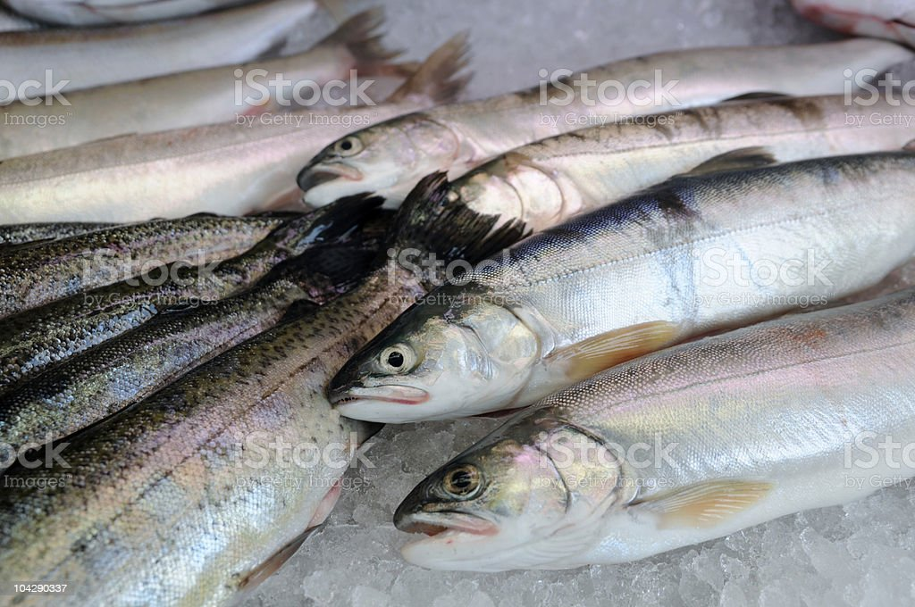 fresh trout at fishmarket royalty-free stock photo