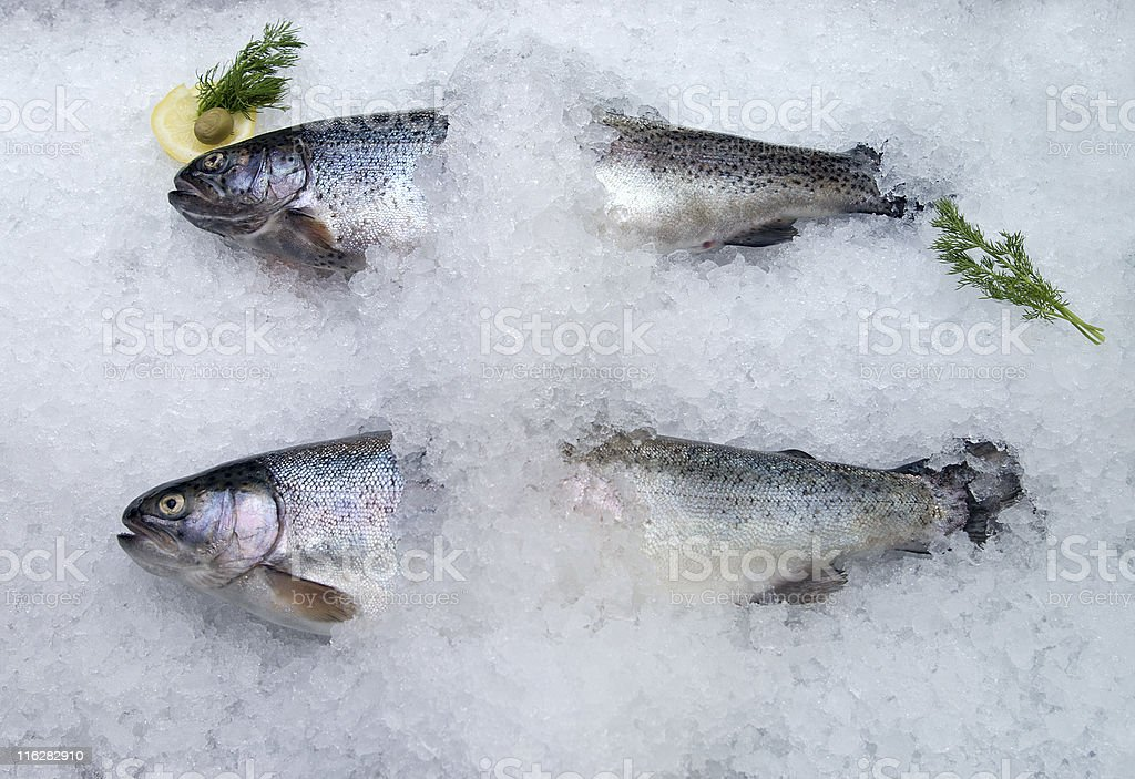 fresh trout on ice stock photo