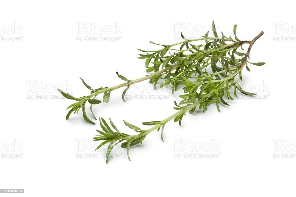Fresh twig of Winter savory stock photo