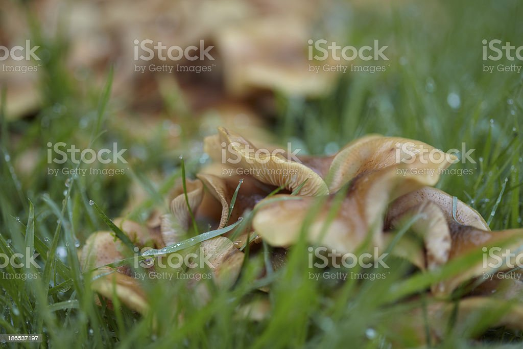 Fresh Urban Garden Mushrooms stock photo