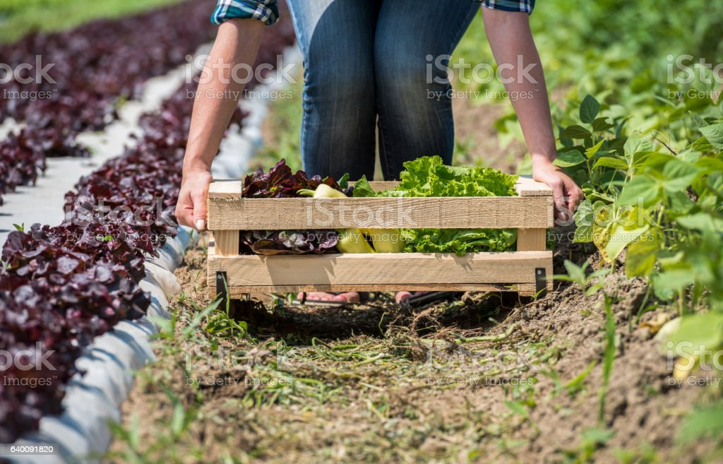Fresh Vegetable Crate stock photo