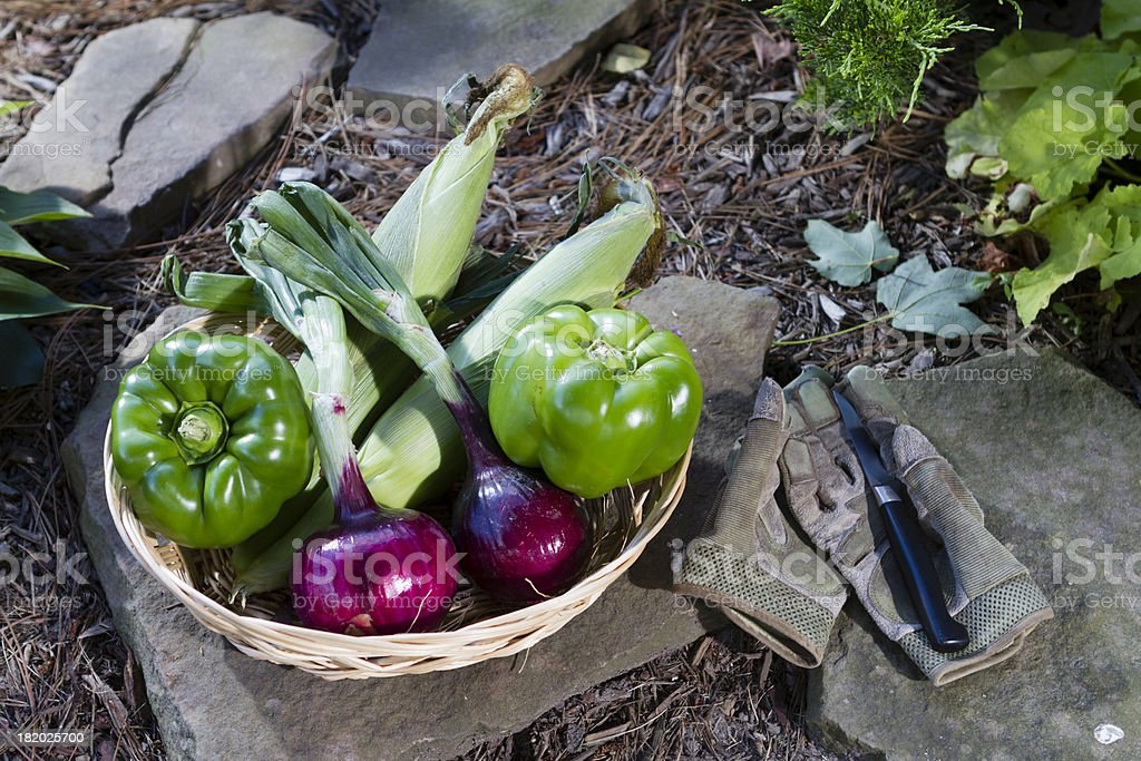 Fresh vegetables fill a basket at the garden's edge. stock photo