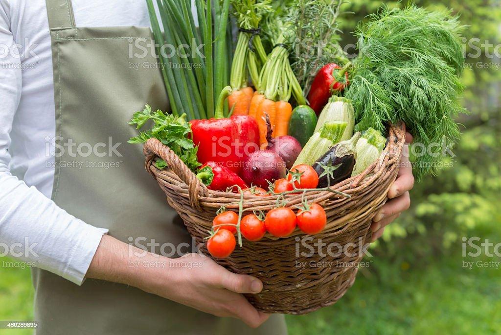Fresh vegetables in basket stock photo
