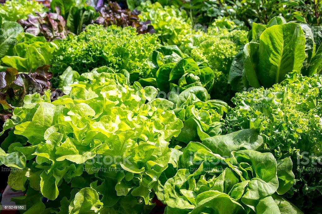 Fresh vegetables leaves background stock photo