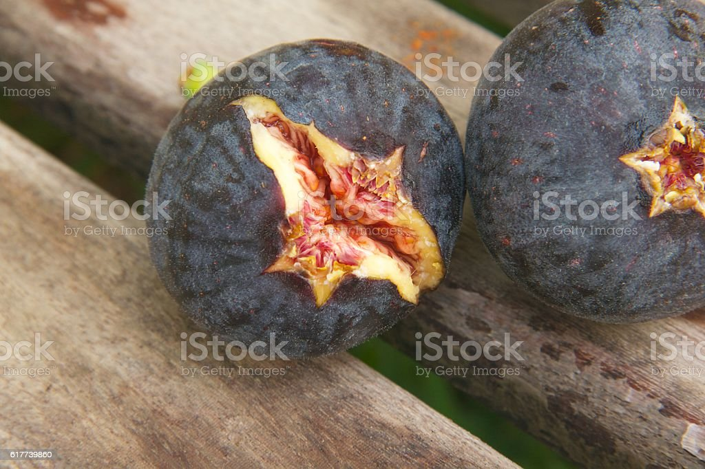 Fresh violet fig. stock photo