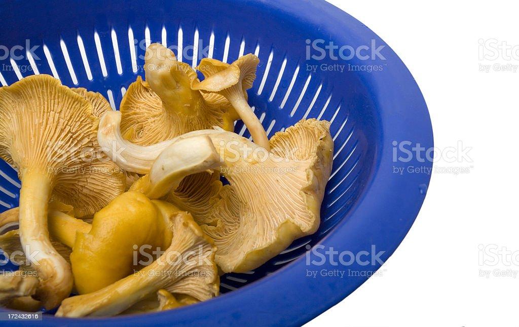 Fresh, Washed Golden Chanterelle Mushroom stock photo