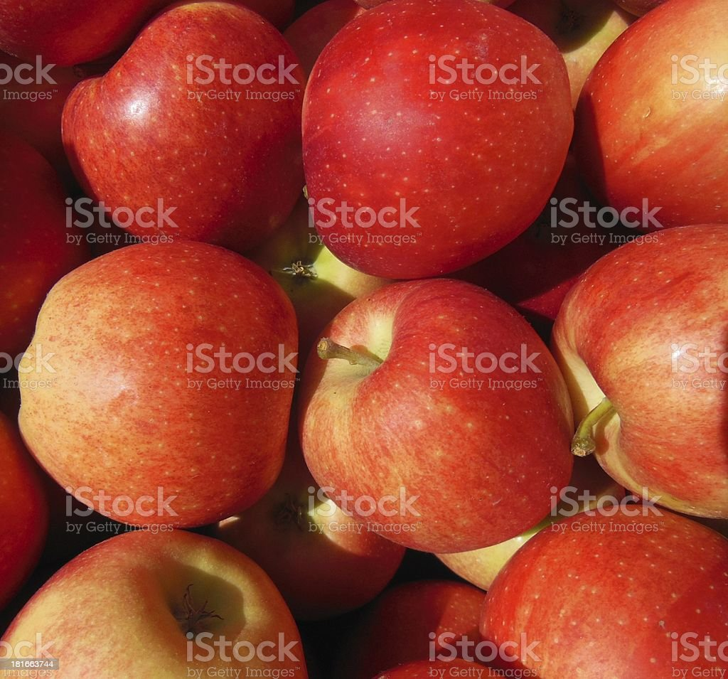 Fresh Washington Apples royalty-free stock photo