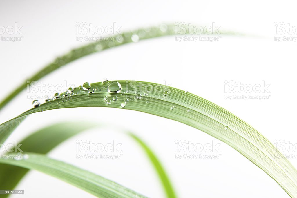 fresh water drop on green grass leaf nature outdoor isolated stock photo
