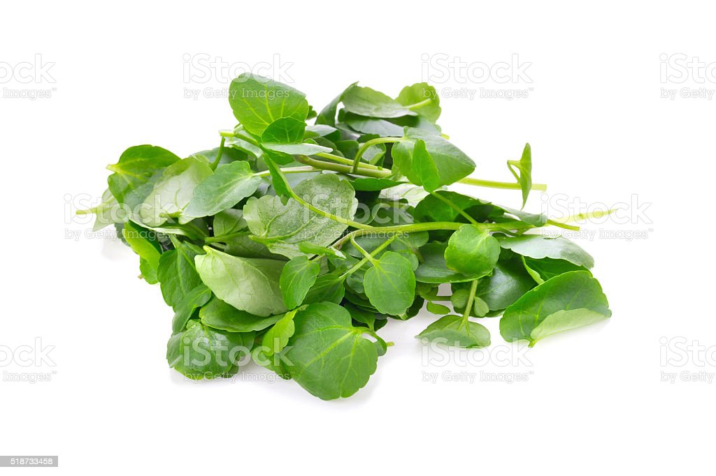 Fresh Watercress isolated on white background stock photo