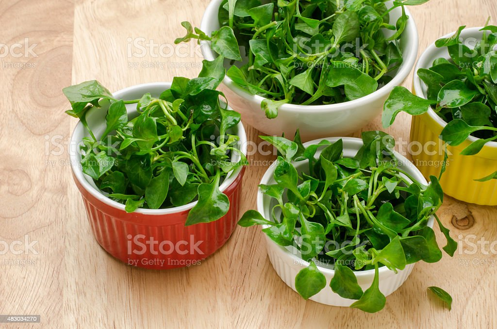 Fresh watercress stock photo