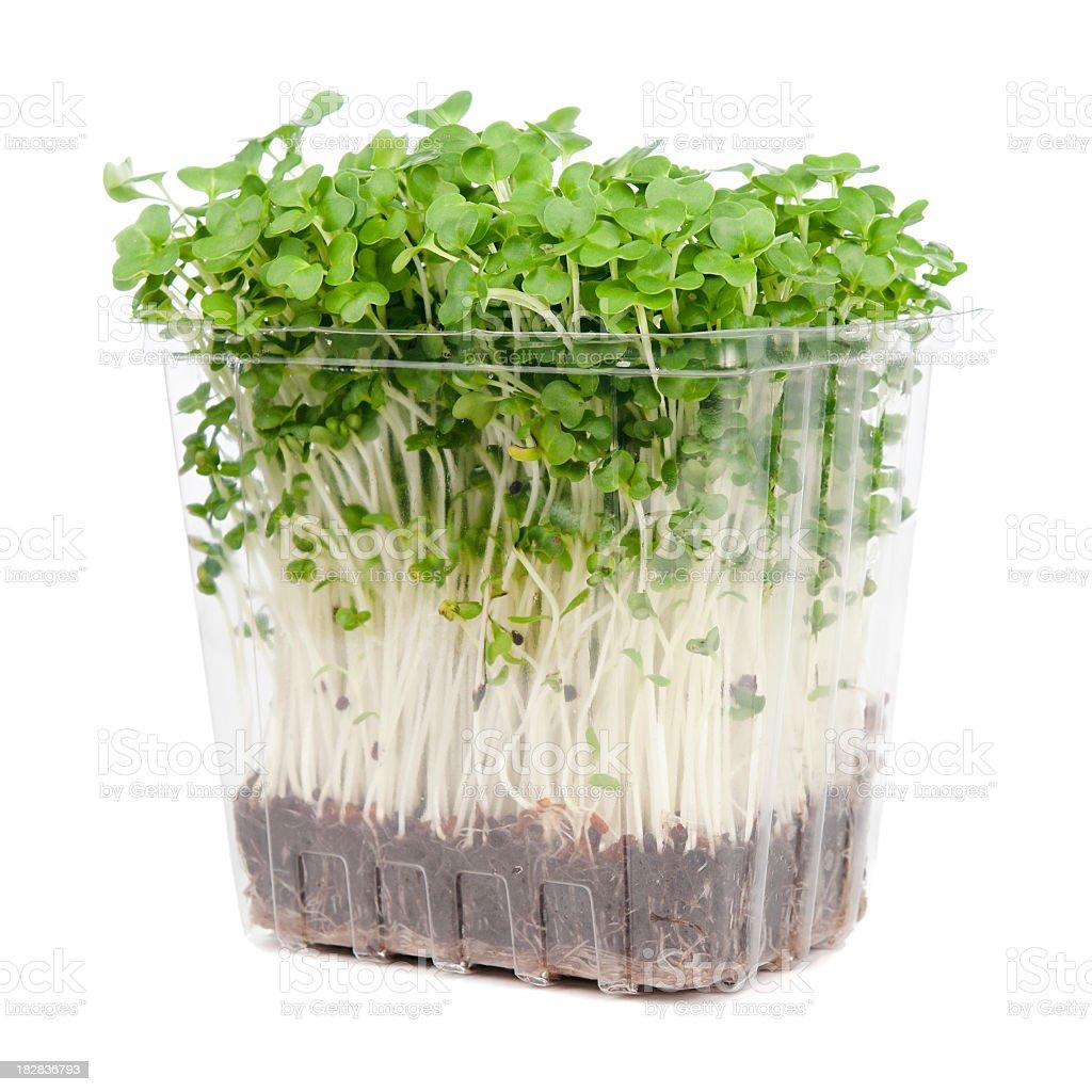 Fresh Watercress Punnet stock photo