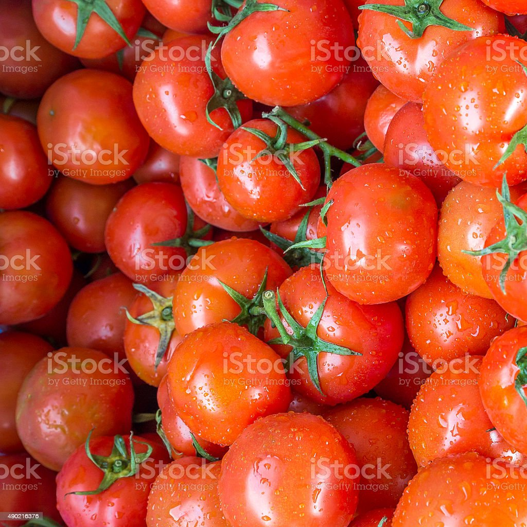 Fresh wet red tomato stock photo