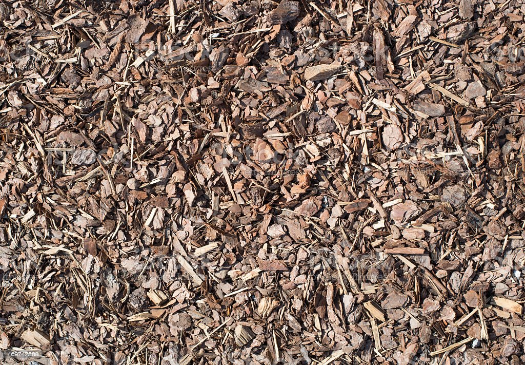 Fresh wet wood chip from pine tree, nature texture stock photo