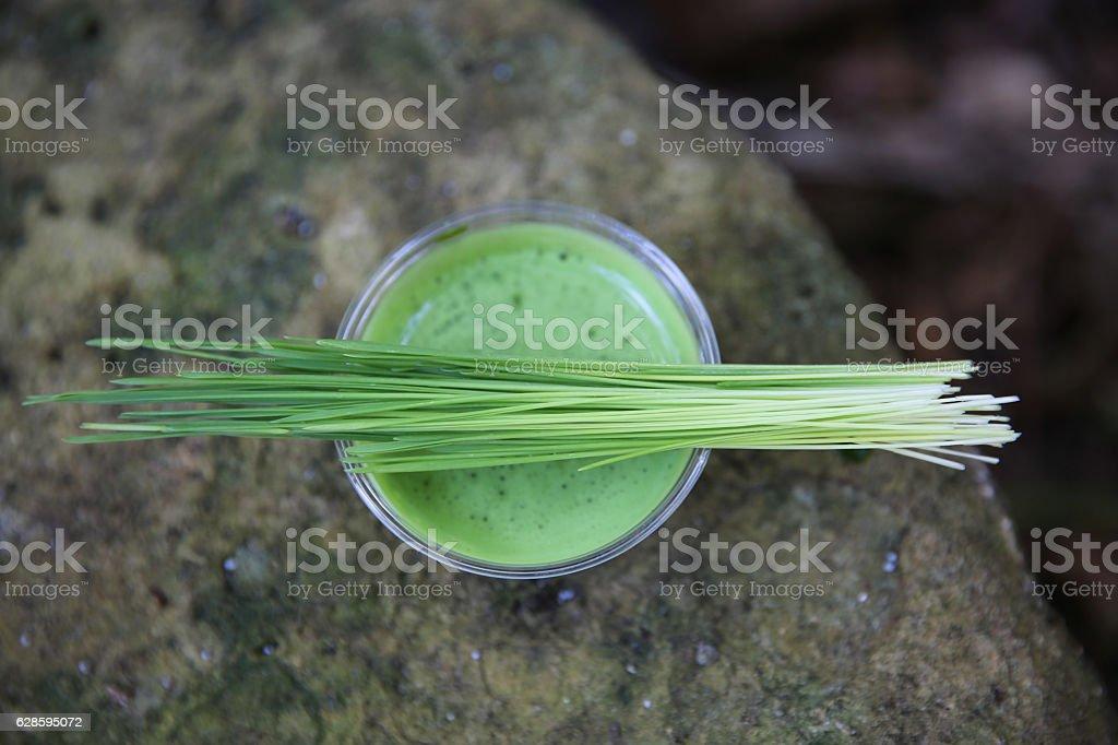 Fresh Wheatgrass Shot stock photo