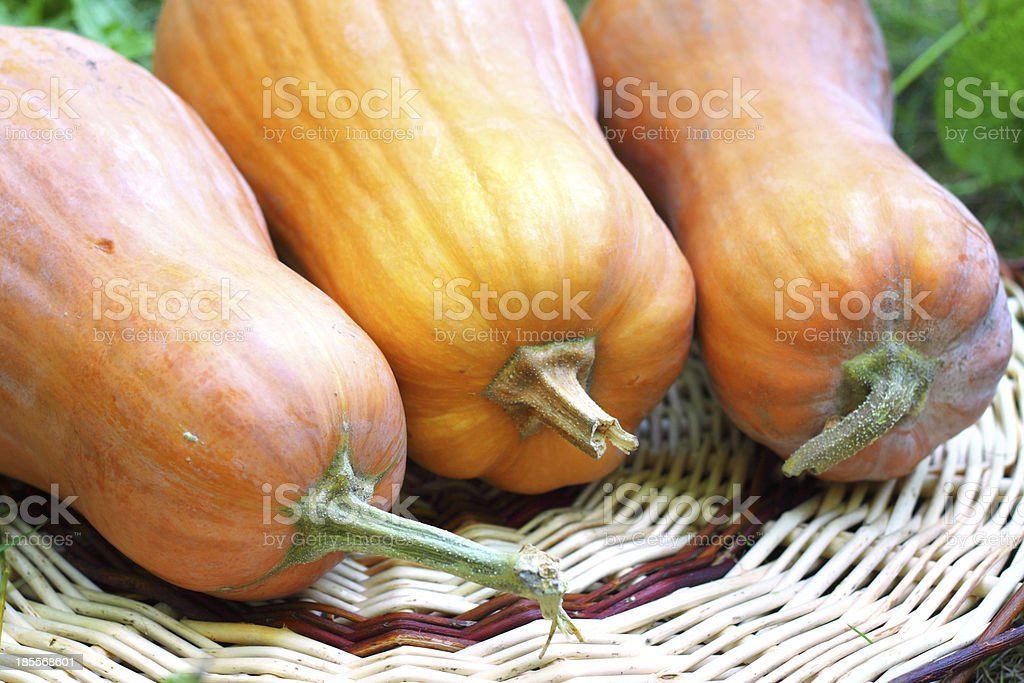 Fresh whole pumpkins royalty-free stock photo