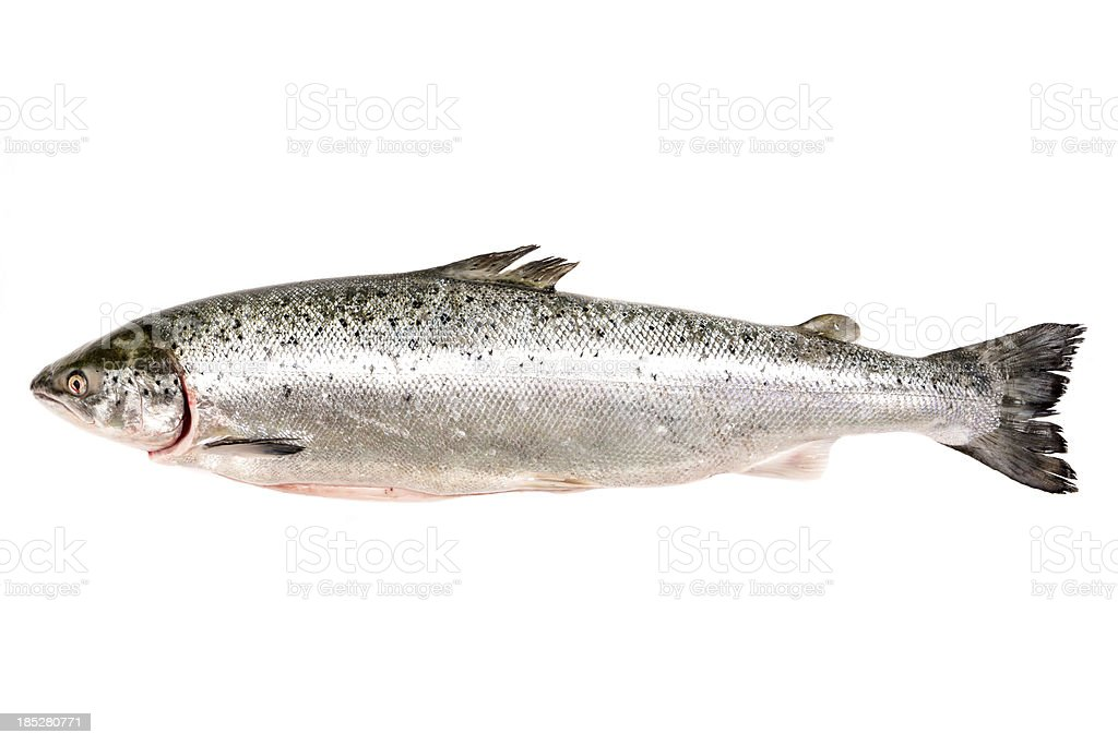 Fresh whole salmon stock photo