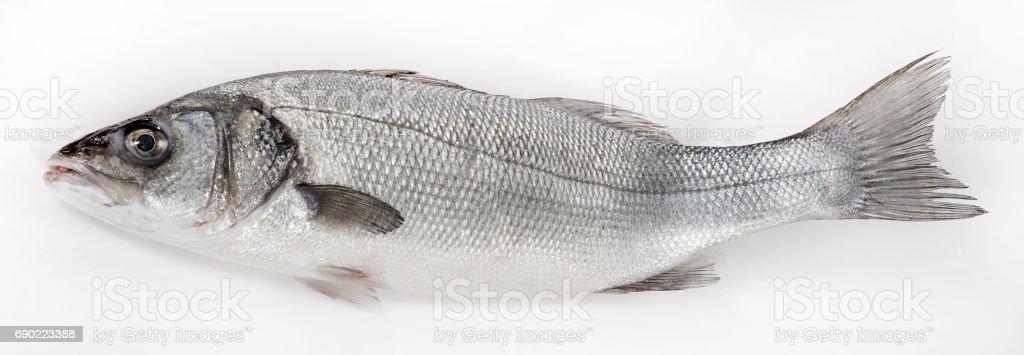 Fresh whole sea basses on white background stock photo