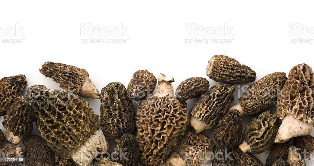 Fresh Wild Morel Mushrooms Border stock photo