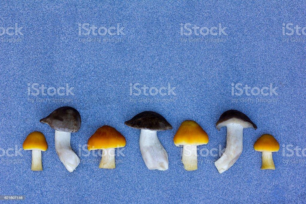 Fresh Wild Mushrooms On A Blue Background stock photo